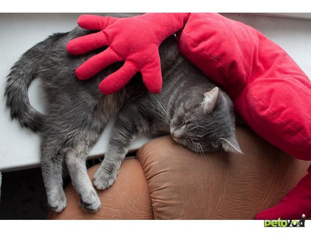 Отдам в дар: Отдается лучший в мире кот (3 года) фото2