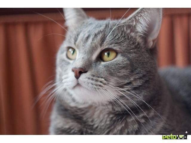 Отдам в дар: Отдается лучший в мире кот (3 года) фото3