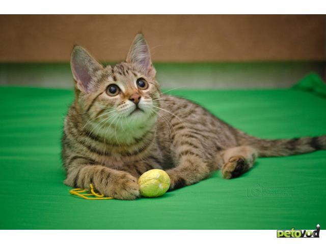 Отдам в дар: Котята 3,5 мес в дар фото2