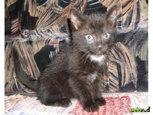 Отдам в дар: Подарю котят фото2