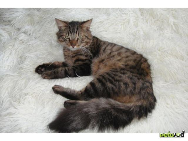 Отдам в дар: Котик в добрые руки фото2