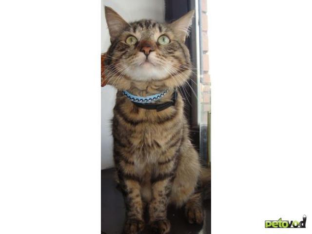 Отдам в дар: Котик в добрые руки фото3