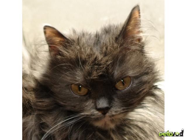 Отдам в дар: Взрослых кошек в добрые руки фото2