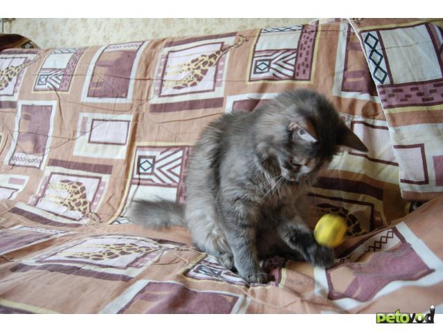 Отдам в дар: Кошечка Фрося ищет заботливых хозяев фото2