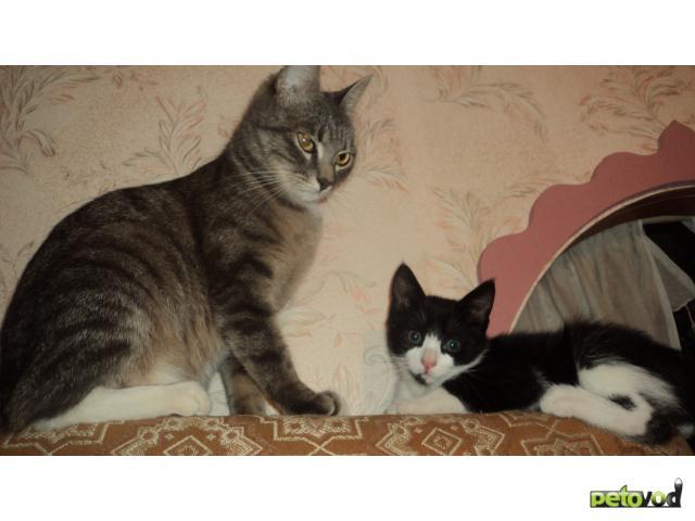 Отдам в дар: Отдам в заботливые, добрые руки котенка фото2