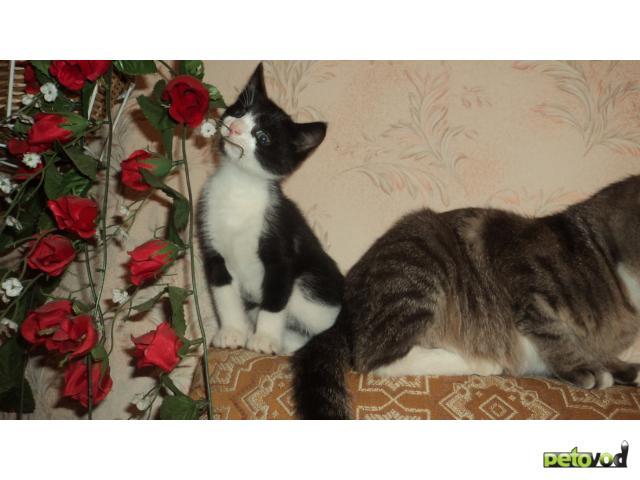 Отдам в дар: Отдам в заботливые, добрые руки котенка фото3