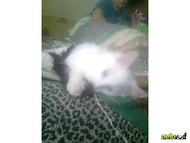 Потерялся/Нашелся: Пропал белый кот, Щелковское шоссе д26 фото3