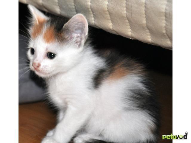 Отдам в дар: Котята в дар 1 месяц фото3