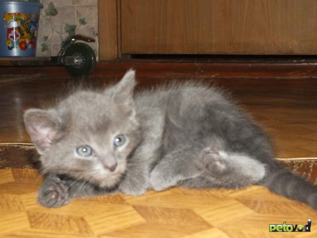 Отдам в дар: Котята-метисы в хорошие руки фото2