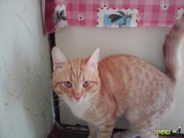 Отдам в дар: Забавный котик Нафаня Отдам даром фото3