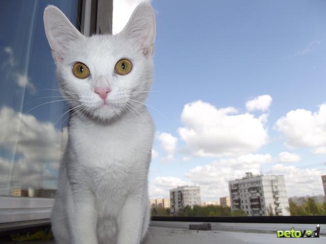 Отдам в дар: Отдам котенка в добрые руки фото2