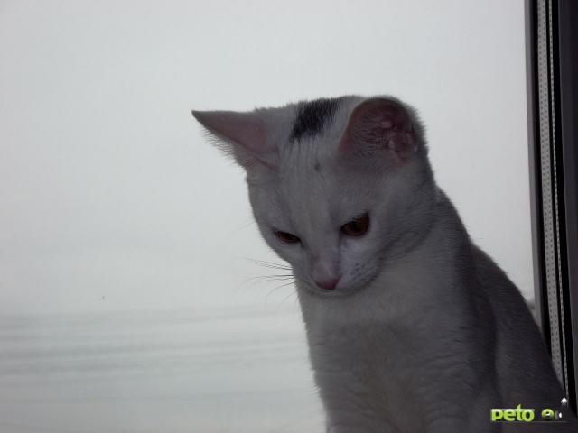 Отдам в дар: Отдам котенка в добрые руки фото3