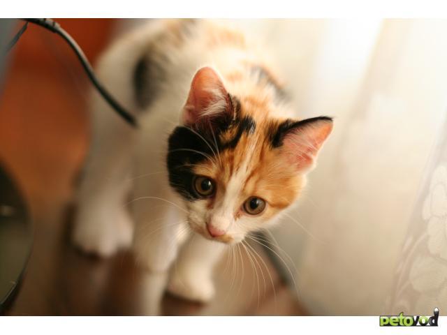 Отдам в дар: Котенок в добрые и ответственные руки фото2