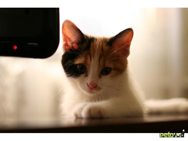 Отдам в дар: Котенок в добрые и ответственные руки фото3