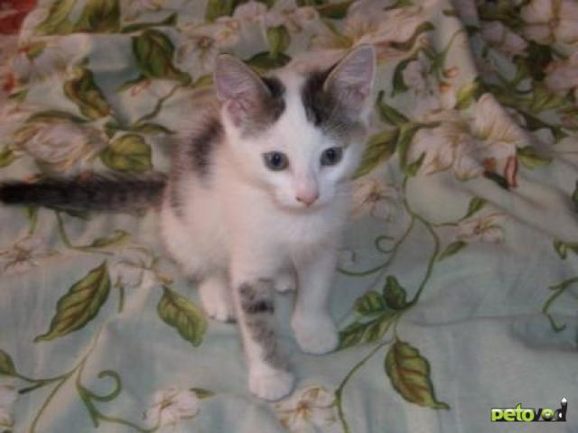 Отдам в дар: Весёлый котенок ищет хозяина фото3
