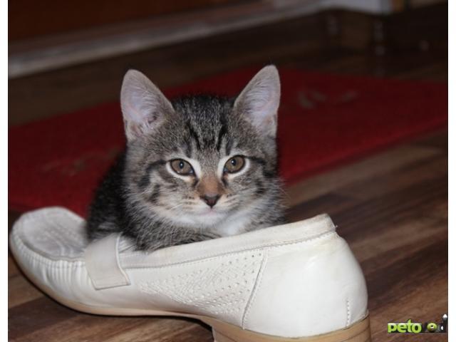 Отдам в дар: Очаровательные котята в добрые руки фото2