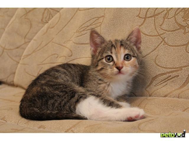 Отдам в дар: Очаровательные котята в добрые руки фото3