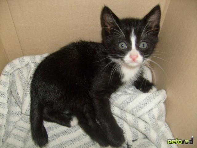 Отдам в дар: Отдам в добрые руки котенка фото2