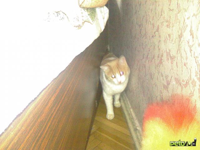 Отдам в дар: Отдам кота в добрые руки фото2