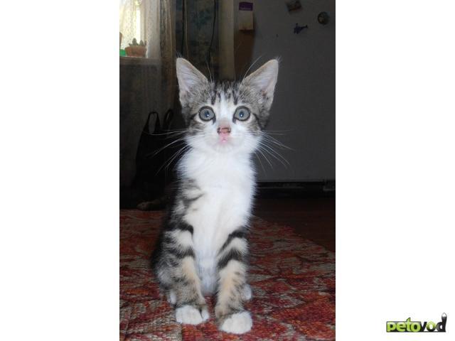 Отдам в дар: Отдам даром котят, они очень ждут хозяев фото3