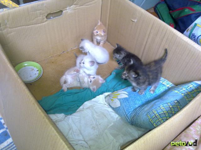 Отдам в дар: Отдам в хорошие руки котяток фото2