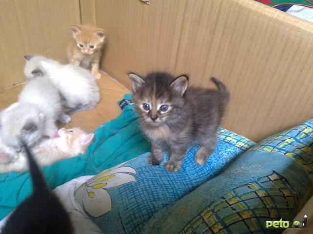 Отдам в дар: Отдам в хорошие руки котяток фото3