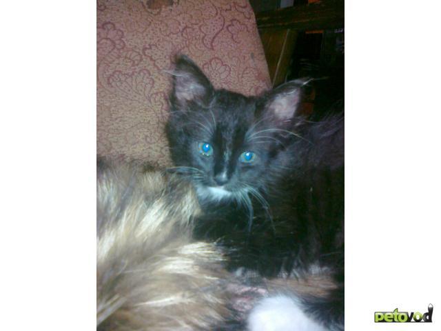 Отдам в дар: Котята хорошим людям фото3