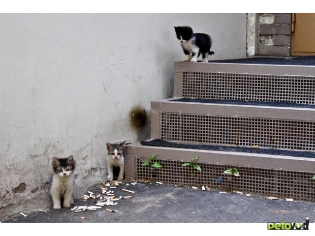 Отдам в дар: Кому толстолапых котят в дар фото2