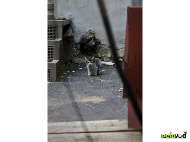 Отдам в дар: Кому толстолапых котят в дар фото3
