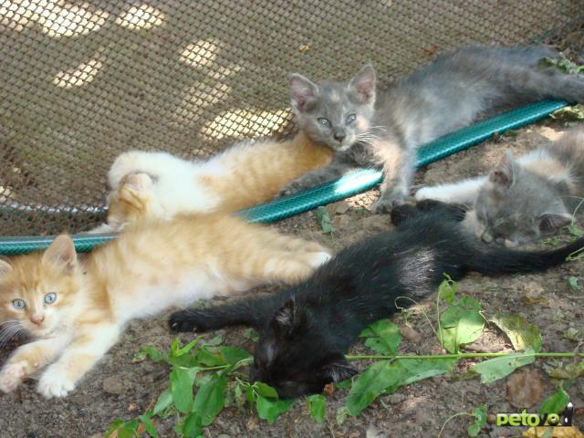 Отдам в дар: Котята в поиске своих хозяев фото2