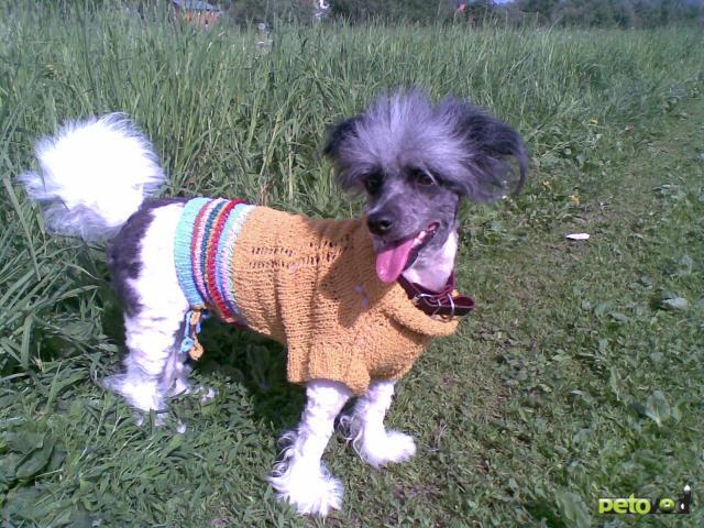 Предлагаю услуги: Одежда для собак(больших, сред,маленьких) и кошек