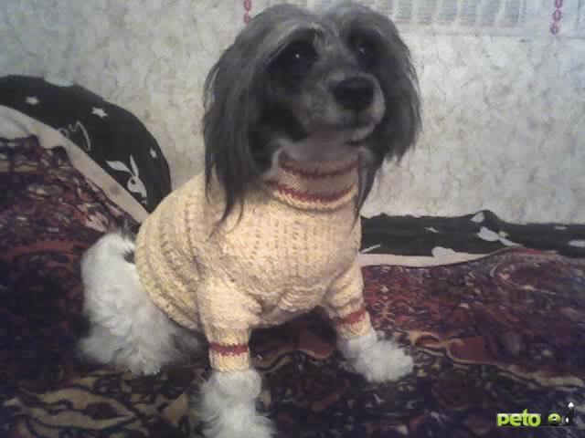 Предлагаю услуги: Одежда для собак(больших, сред,маленьких) и кошек фото2
