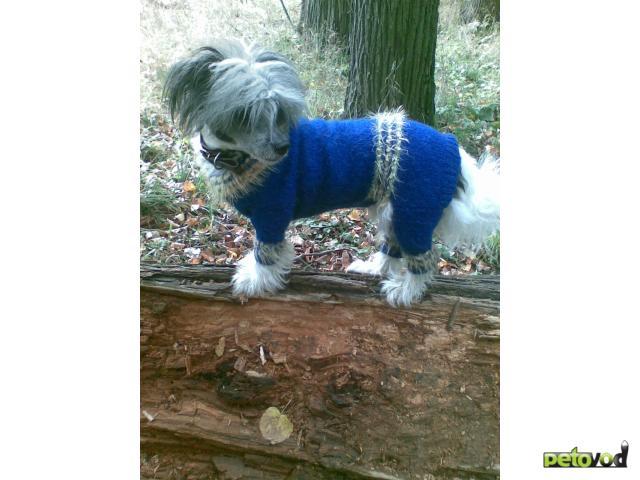 Предлагаю услуги: Одежда для собак(больших, сред,маленьких) и кошек фото3