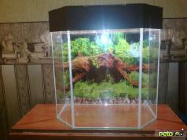 Продаю: Аквариумы, террариумы, тумбы  фото3