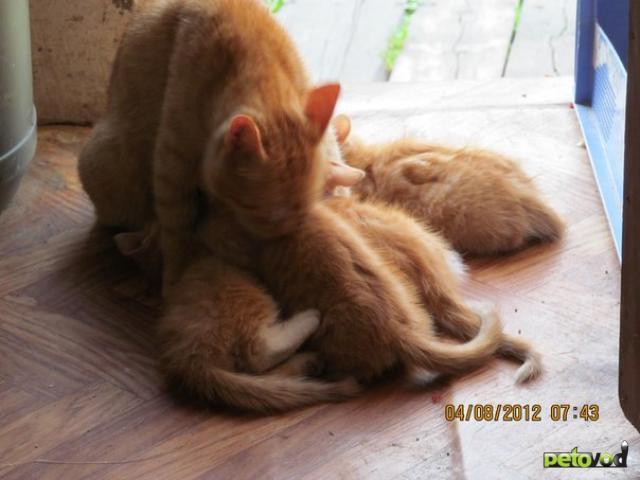 Отдам в дар: Отдам замечательных котят