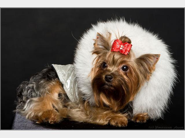 Предлагаю услуги: Одежда для собак мелкий и крупный опт