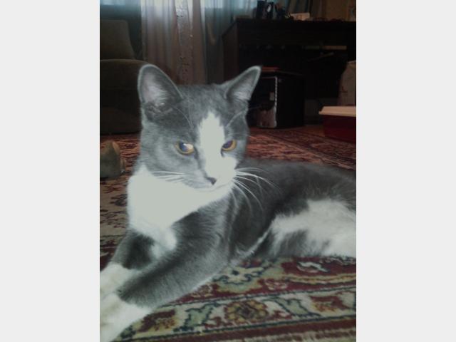 Потерялся/Нашелся: Найден кот в Южном Бутово