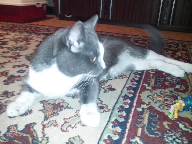 Потерялся/Нашелся: Найден кот в Южном Бутово фото2
