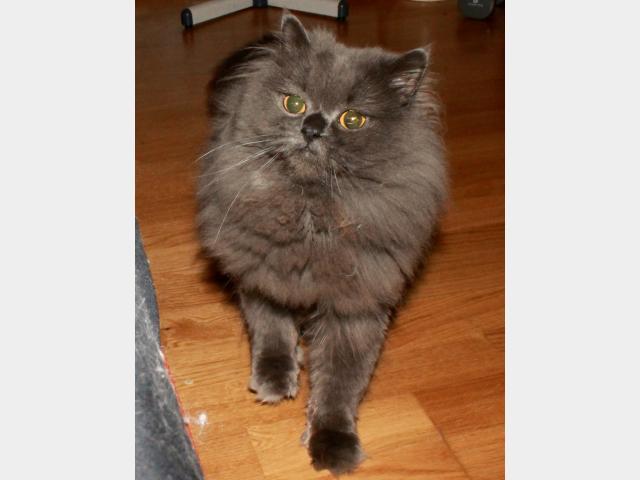 Вязка: Ищем кошечку для вязки  фото2