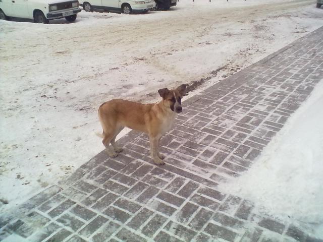 Отдам в дар: Замерзает собака