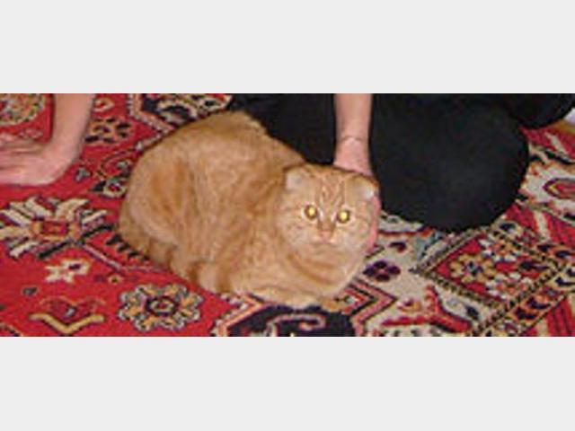 Вязка: Ищем кота для вязки