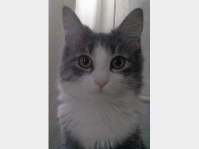 Отдам в дар: Кошка-путешественница в поиске хозяев фото3