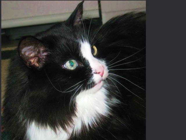 Отдам в дар: Котик-потеряшка в добрые руки фото2