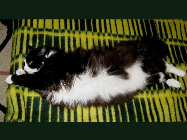 Отдам в дар: Котик-потеряшка в добрые руки фото3