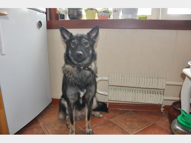 Отдам в дар: Умный пес Лаки в добрые руки фото3