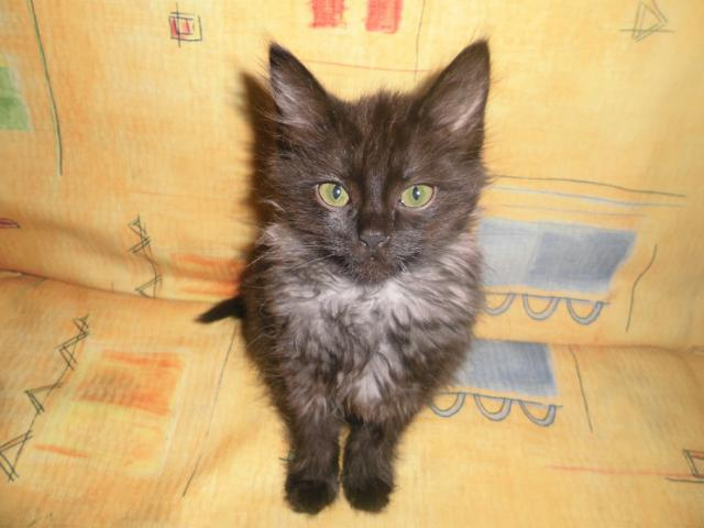Отдам в дар: Котенок в дар