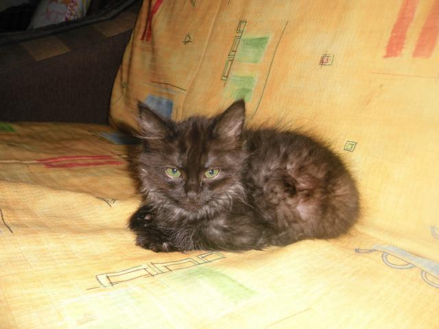 Отдам в дар: Котенок в дар фото4