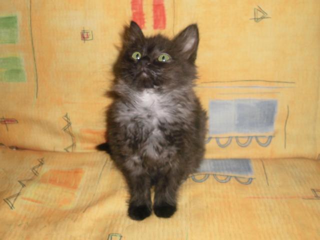 Отдам в дар: Котенок в дар фото3
