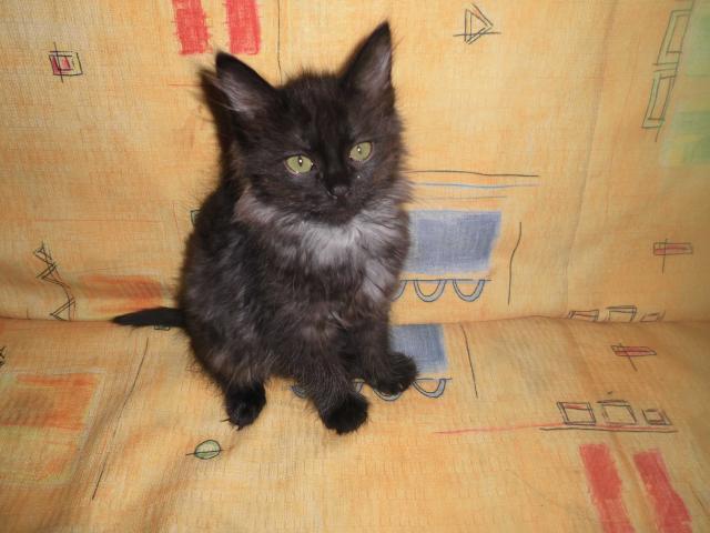 Отдам в дар: Котенок в дар фото2