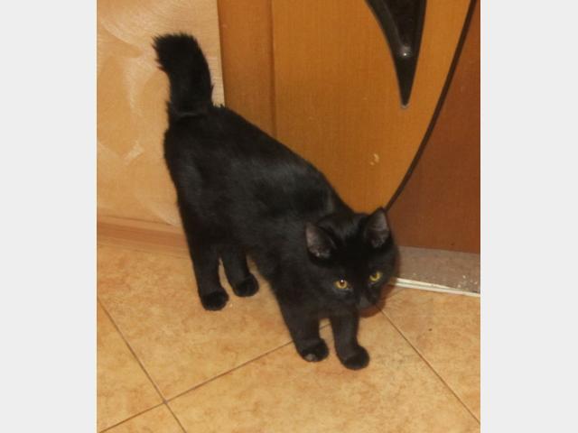 Потерялся/Нашелся: Найден чёрный кот